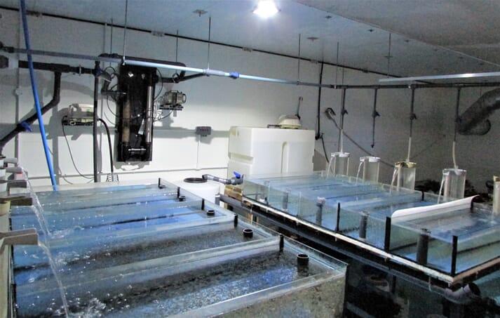 Three-Sixty Aquaculture Limited  tilapia hatchery