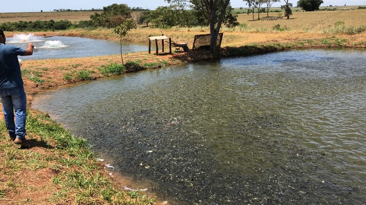 A typical, pond-based tilapia farm in Brazil