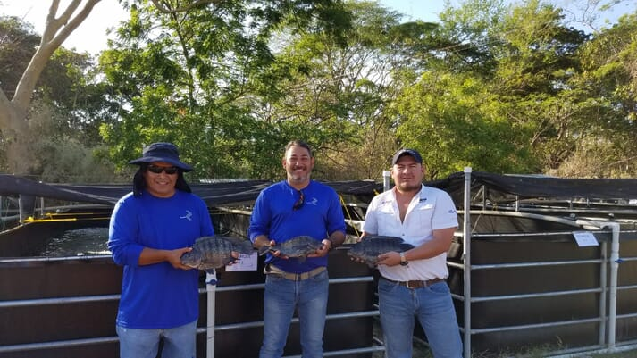 Acceso El Salvador staff with recently harvested tilapia - which have been growing 30 percent faster than strains used locally