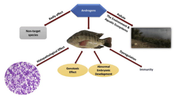 The diverse effects of the use of hormones on both fish and their environments