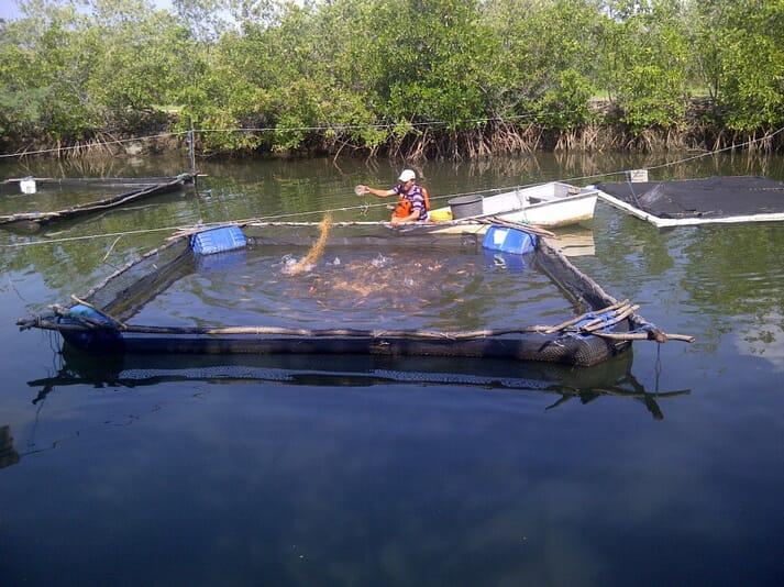 A saltwater tilapia farm in Honduras