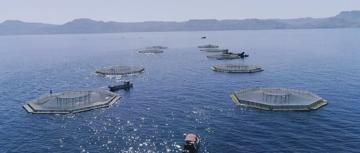 Earth Ocean Farms is the biggest totoaba producer in the world