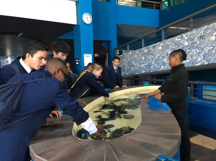 The company is offering free passes to the Two Oceans aquarium.