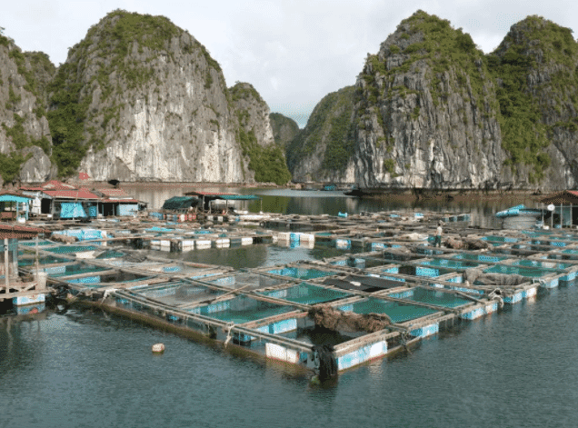 A fish farm in Vietnam