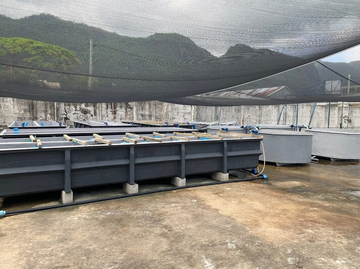 The Seychelles Fishing Authority's Sea Urchin Research Facility (SURF)