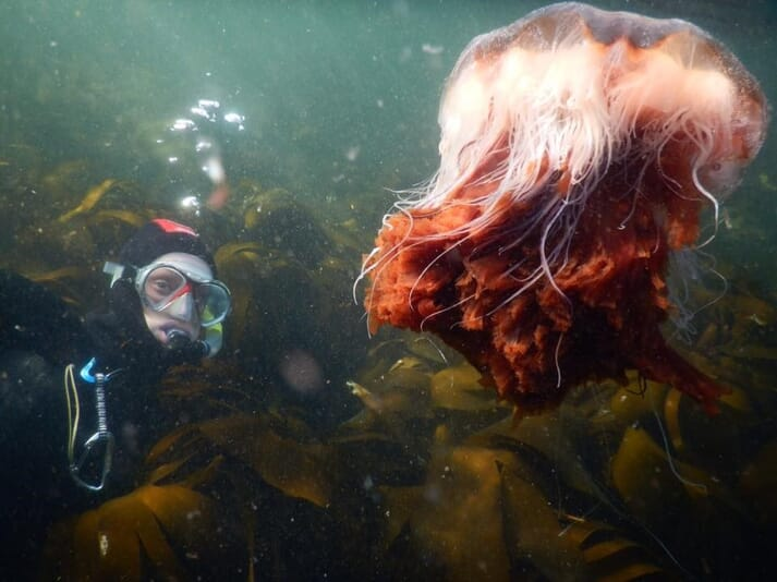 Dr Kintner has studied jellyfish in both the UK and Australia