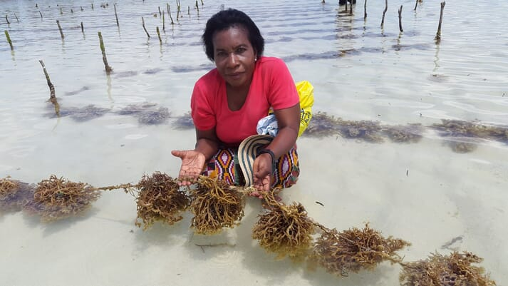 Dr Flower Msuya researching seaweed affected by epiphytes in Zanzibar