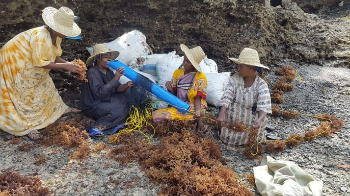 Tubular nets have shown promising results, especially in reducing seaweed breakage and allowing women to successfully produce higher valued seaweed