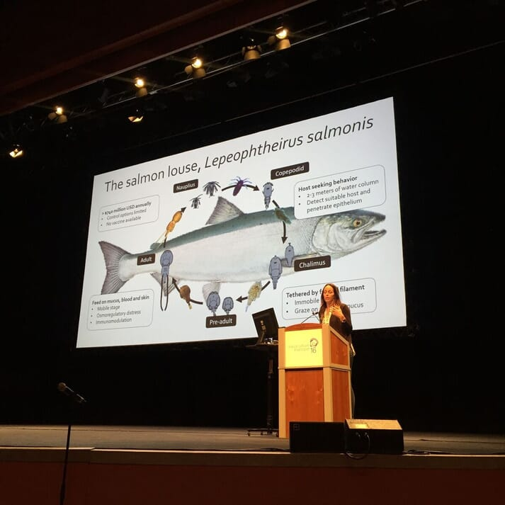 Dr Braden presenting her research on sea lice resistance at Aquaculture Europe in Edinburgh 2016