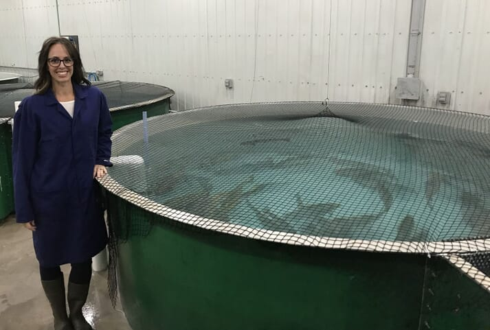 AquaBounty produces GM salmon in RAS facilities in Indiana and Rollo Bay (pictured)