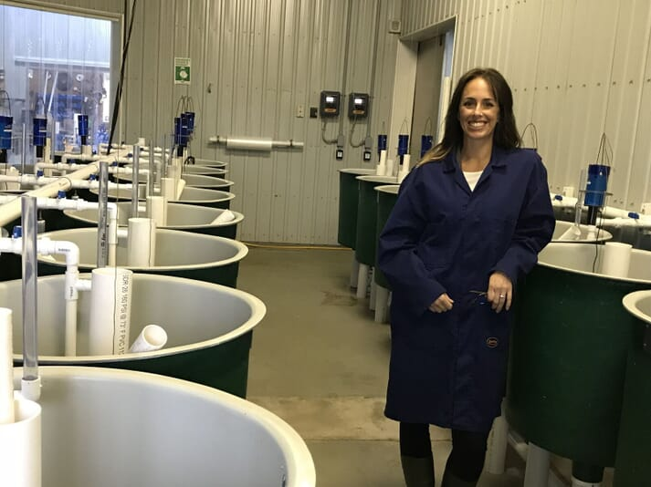 The early rearing area at AquaBounty's new facilities in Rollo Bay. These smaller tanks will be used for large-scale family studies