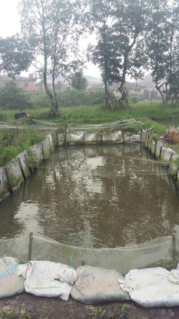 A catfish pond in Nigeria