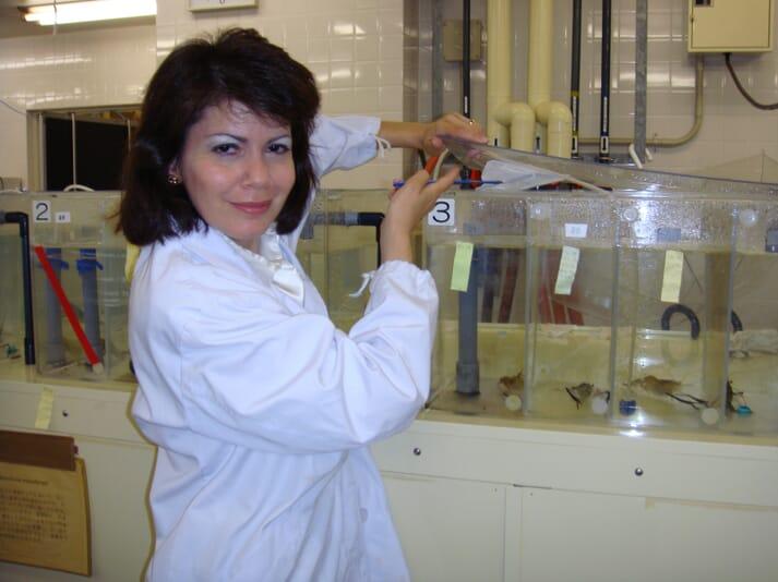 Dr Wilder on JIRCAS premises with experimental aquariums for the giant freshwater prawn Macrobrachium rosenbergii