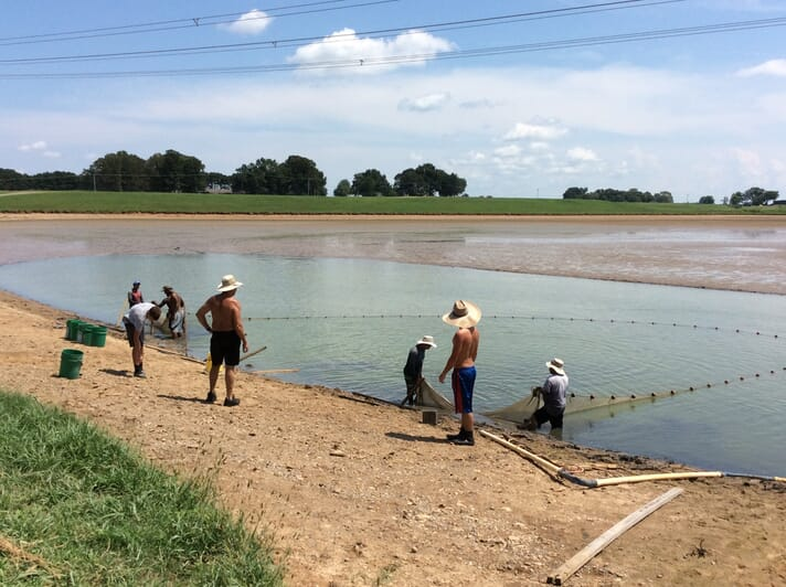 The Harry Saul Minnow Farm produces up to 500,000 baitfish a year