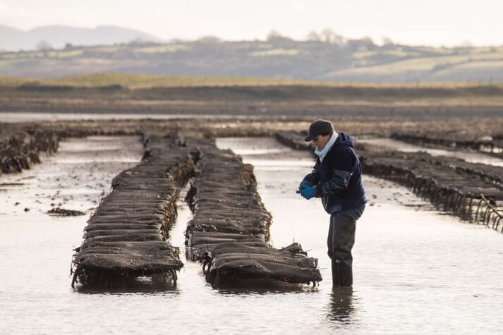 An oyster farm in Sligo