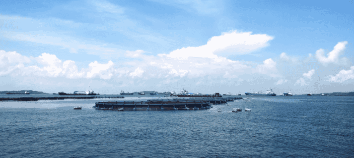 A barramundi farm site, where the fish are gown in offshore net pens, in Singapore