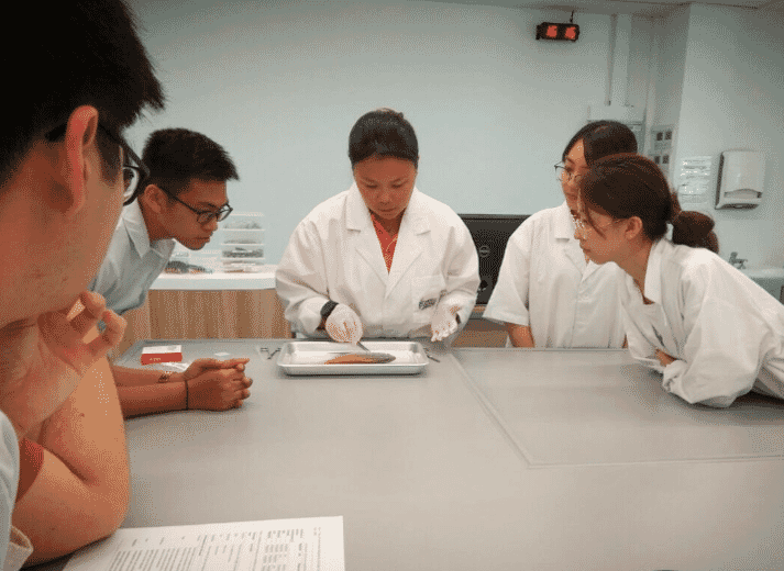 James Cook University Singapore students watch attentively as Marie explains the post-mortem process.