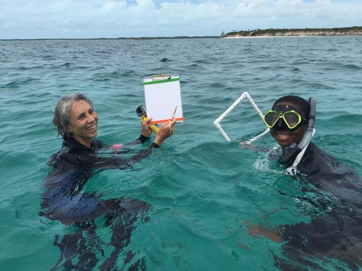 Dr Davis undertaking a queen conch survey in the Caribbean