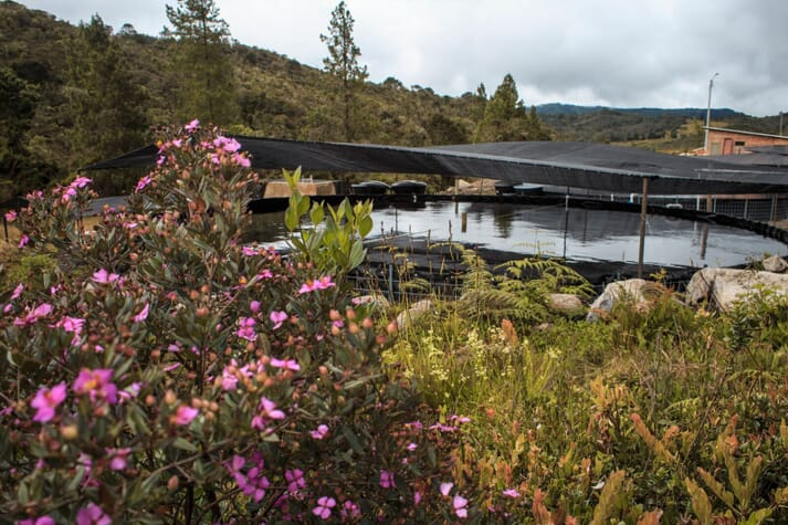 Patricia's trout farm is in the Andes, not far from Bogotá