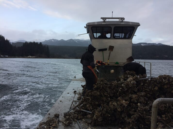 The Hama Hama company's barge harvesting oysters in Washington State's Hood Canal