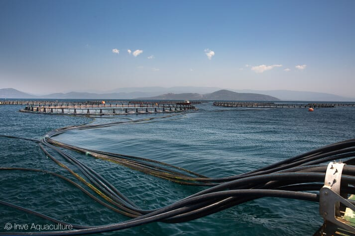 The Liberal Party hopes to phase-out ocean pen farming by 2025