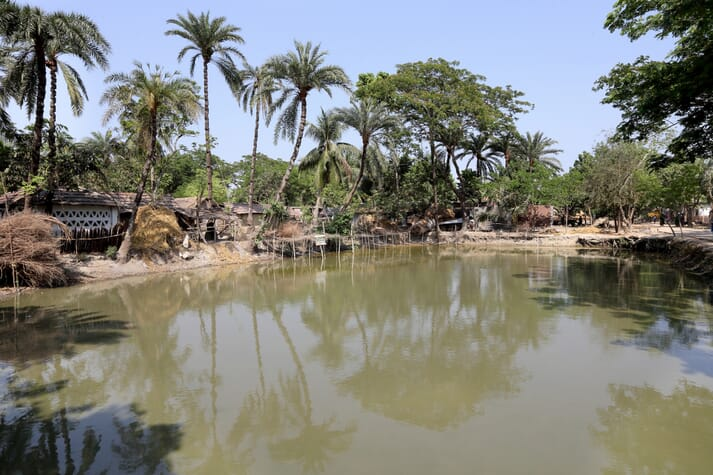 A pond being used for polyculture of small fish, carp and rui in Jessore, Bangladesh