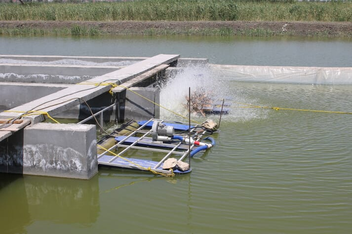In-pond raceway model established for the first time in Egypt at Abbassa Research Center run by WorldFish, in cooperation with the USSEC, under the SDC- funded STREAMS project