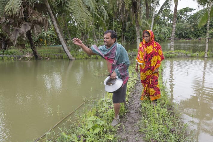Fish farmers feeding fish in Khulna, Bangladesh