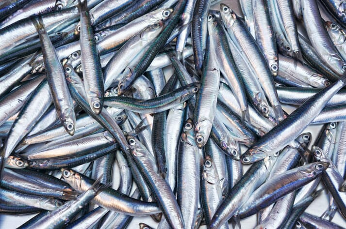 Many vessels target anchovies and other small pelagic fish which are then turned into fishmeal and fish oil