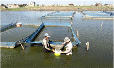 Two fish farm technicians standing in front of a net suspended in a pond
