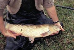 Farmer with carp