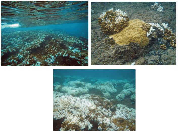 Bleaching of Stony Corals