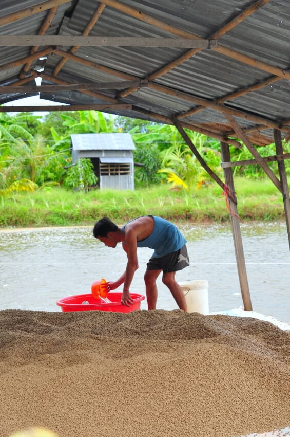 Pangasius farm technician next to a pile of pelleted fish feed