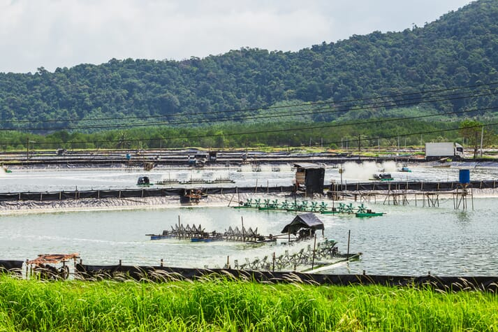 Outdoor shrimp farm showing multiple ponds and paddle wheels