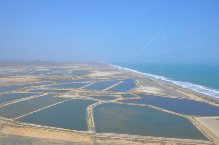 Ecuador's shrimp farming model is based on extensive production with most farms stocking at around 15 shrimp square metre