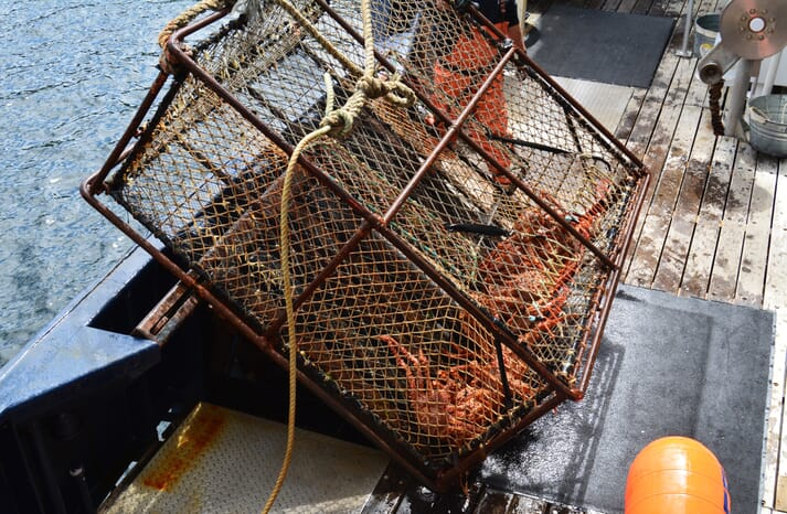 European and North American coldwater crab fisheries have been asked to raise their sustainability levels