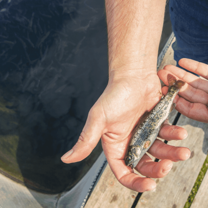 The feed is designed with trout hatcheries, in particular those based on RAS, in mind