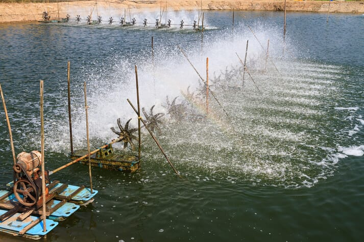 A shrimp pond being aerated by an array of paddlewheels